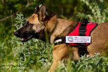 Antipoison Dog Units in Greece: Kuki patrolling in Meteora region