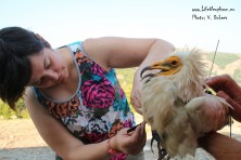 Jenny from RSPB is tagging Jenny from Eastern Rhodopes.