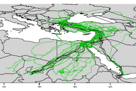 The tracks of 14 Egyptian vultures from the Balkans tagged with satellite transmitters in the period 2010-2016.