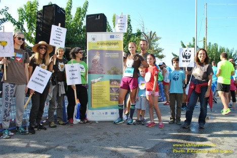 The WWF Greece actively supports the Egyptian vulture (L. Kapsalis/WWF Greece)