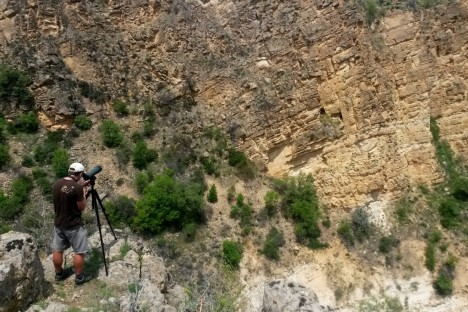 Photo: Monitoring Egyptian Vulture nests near Beypazari, by Evrim Tabur