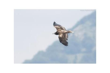 Photos - Hristo Peshev, Fund for Wild Flora and Fauna
