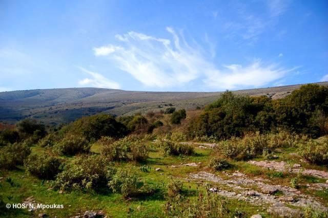 SPA Paramythia mountains, Kalamas and Acherontas gorge (HOS/N. Boukas)
