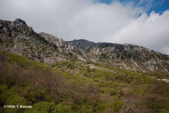SPA Central Zagori & eastern part of Mount Mitsikeli (HOS/T. Bounas)