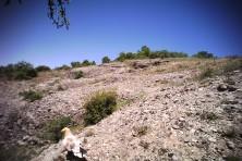 EV at Meteora's feeding site