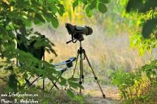 Nest guarding of Egyptian vultures in Bulgaria - season 2012