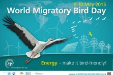 The World Migratory Bird Day was celebrated with events dedicated to the Egyptian vulture