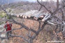 Installation of wooden platform for supplementary feeding in Bulgaria
