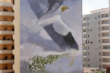 Giant Egyptian vulture appeared in the sky of Albania