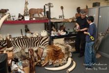 International cooperation against illegal wildlife trade