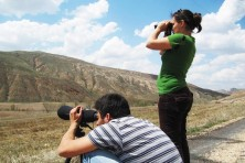 Survey of Egyptian Vultures in Turkey, 2012