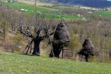 SPA Oreinos Evros-Koilada Dereiou (WWF/D. Skartsi)