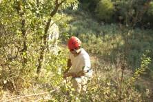Благоустройване на изкуственото гнездо от Зелени Балкани (сн. С. Николов / БДЗП)