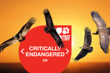 Conservationists warn Africa's vultures are sliding towards extinction