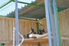 Team of BSPB opening the door of the adaptation aviary  © Polina Dimitrova
