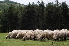 BSPB is organizing information meetings with farmers in Eastern Rhodopes