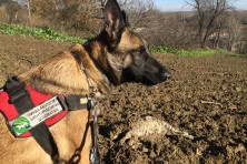 Greek anti-poison dog units report for 2015