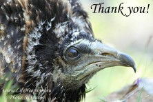 Giving hope for the Egyptian vultures on the Balkans – fundraising campaign 2015