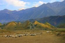 Овцете и козите са най-често отглежданите животни в Албания и числеността им през последните години се увеличава (БДЗП/С.Николов)