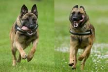 Antipoison Dog Units in Greece: Kiko and Kuki