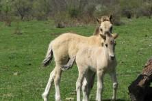 Horses in the Eastern Rhodopes