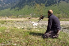 Trapping Aoos in Epirus, Greece