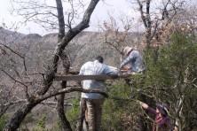 Installation of wooden platform for supplementary feeding in Greece