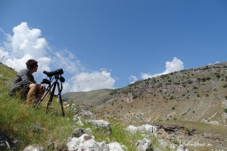 HOS team in search for Egyptian Vulture territories in Albania