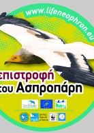 Sticker for Greece (2016 edition)